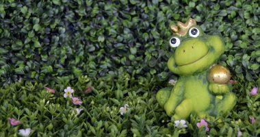 frog-1404357_960_720